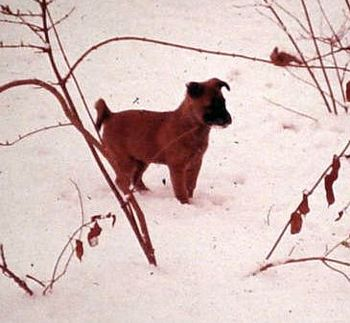 tn_ronsportsman_hhc_mascot__winter_1963edit.jpg